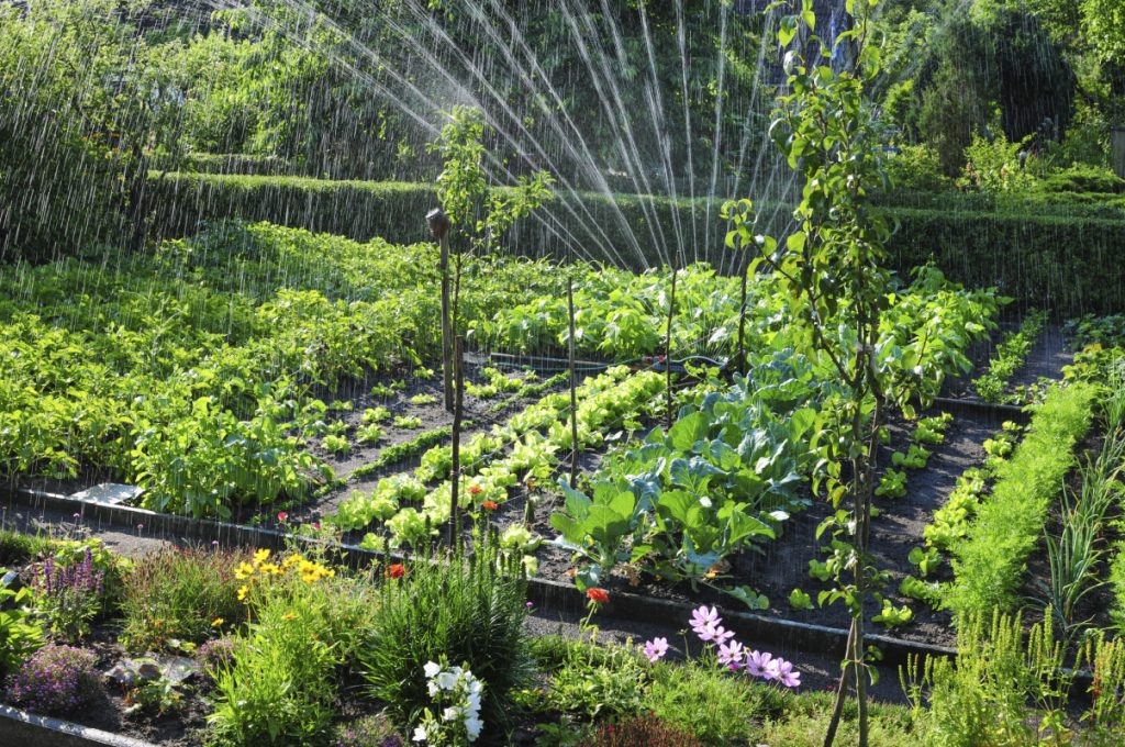 healthy-garden-being-watered