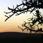 dry-tree-at-sunset